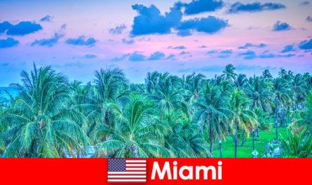 Майамі приголомшливою природою з великою тропічною пустелі