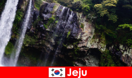 Чеджу в Південній Кореї субтропічний вулканічний острів з приголомшливими лісами для іноземців