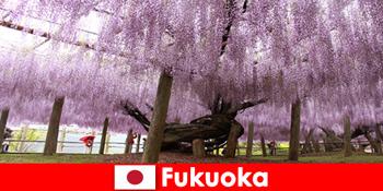 Природа поїздки для незнайомих людей в незайманій природі Фукуока Японії