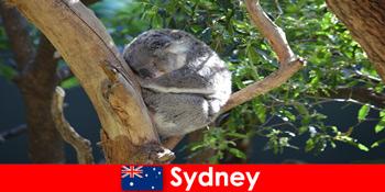 Напрямок Сідней Австралії в екзотичному зоопарку з ночівлею досвідом