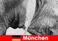 Спеціальна поїздка для відвідувачів найогінальнішого зоопарку Німеччини Мюнхен